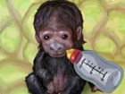 Take care of your very own monkey.Help her grow to become a healthy adult.Your