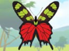 Butterflies are beautiful! Design and pattern your very own butterfly in any wa