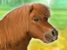 You have just been given your very own pony. He needs help running, leaping, ra