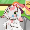 This little bunny is super cute and loves to ge...